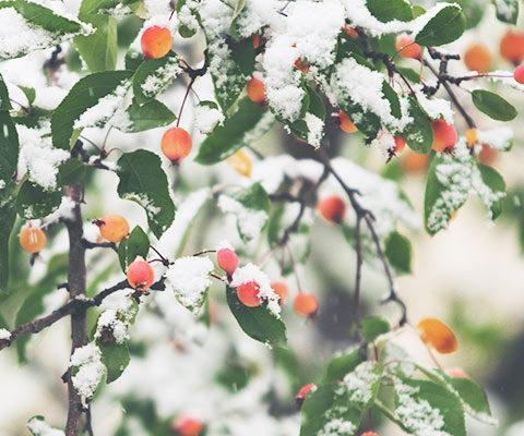 Protéger ses plantes de jardin pour l'hiver