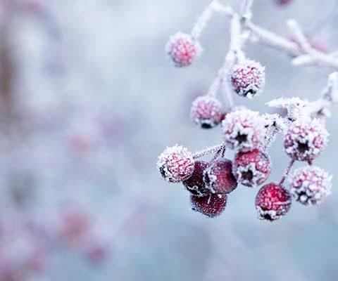 que faire en hiver dans le jardin ?