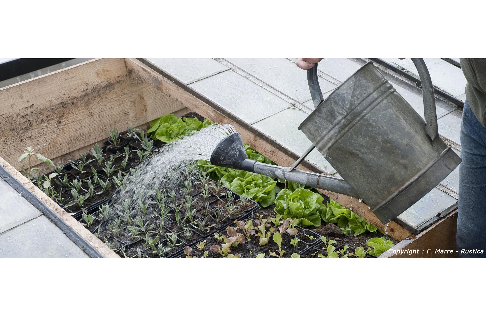 Quels l gumes semer en f vrier jardinage blog jardin Jardinage en janvier