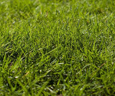 Comment semer sa pelouse