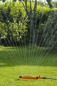 Arrosage d'un pelouse par arroseur oscillant Hozelock