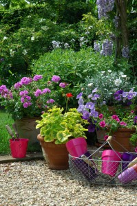 Potée fleuries de petunia, pelargonium et convolvulus. Glycine. Stylisme M.Marcat