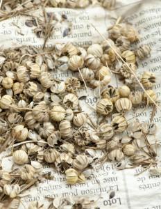 Récolte de graines