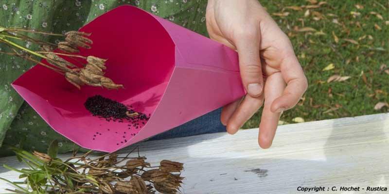 Conserver vos graines du jardin