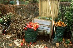 ramassage de feuilles mortes et branchages en automne pour préparer un compost