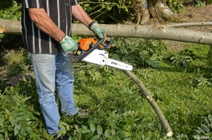 La panoplie idéale pour abattre un arbre
