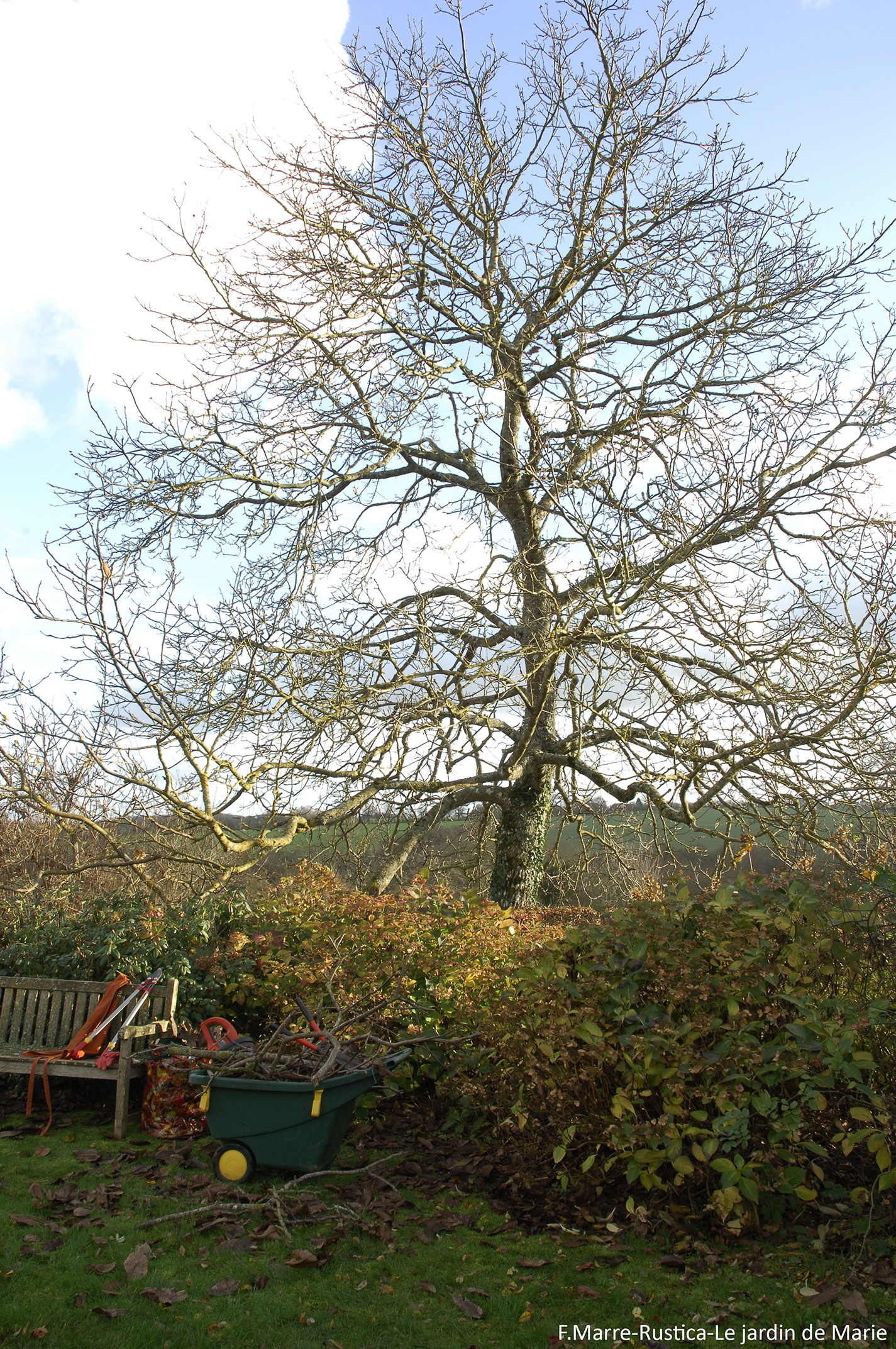 abattre un arbre au jardin. Black Bedroom Furniture Sets. Home Design Ideas
