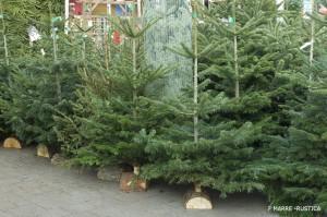 """Large choix de sapins de Noël """"Abies"""" en jardinerie"""