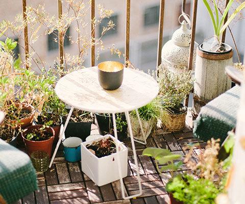 Décoration végétale sur la balcon