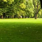 Une belle pelouse verte et soignée