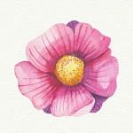 jour-fleur-calendrier-lunaire