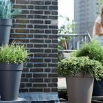 Plantes en pot : comment bien planter une plante ?