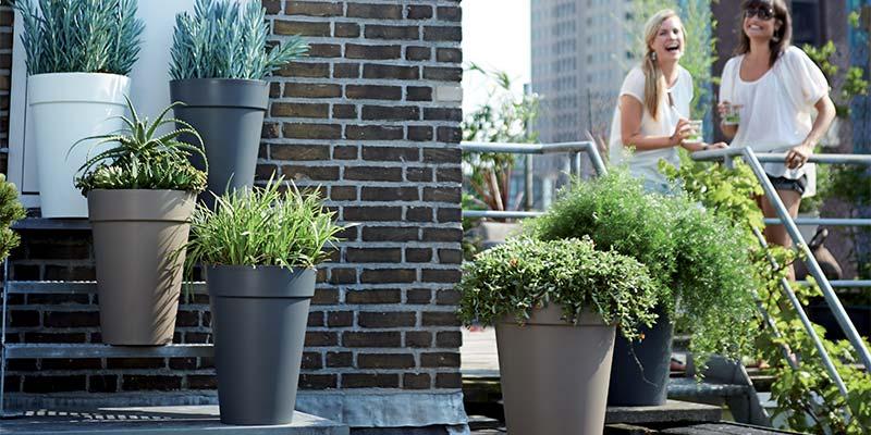 quand et comment arroser ses plantes en t. Black Bedroom Furniture Sets. Home Design Ideas