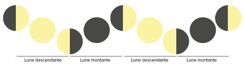 Pourquoi utiliser le calendrier lunaire pour jardiner for Jardin et la lune