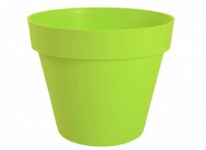 Pot de leurs pour citronnier en pot