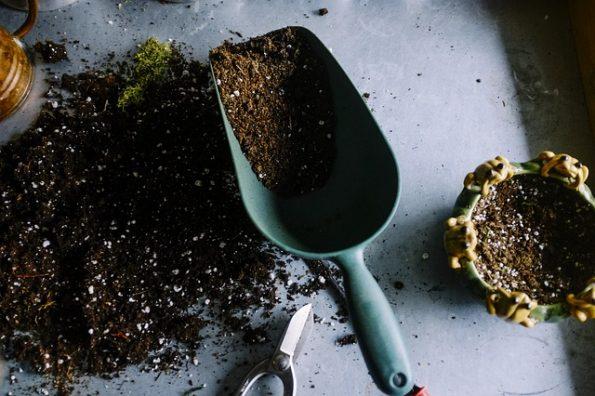 entretenir les herbes aromatiques