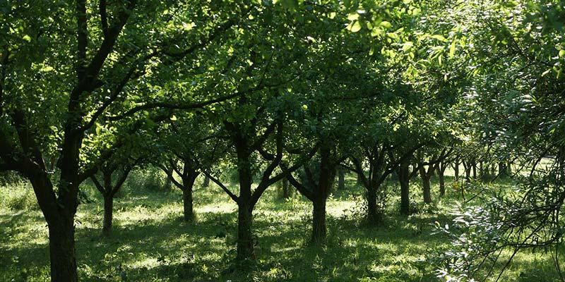 Marvelous quand traiter les arbres fruitiers 5 tailler ses arbre - Quand traiter les arbres fruitiers ...