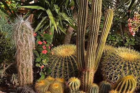 Cactus artificiel pour le jardin