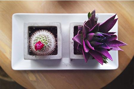 Cactus - Plante artificielle