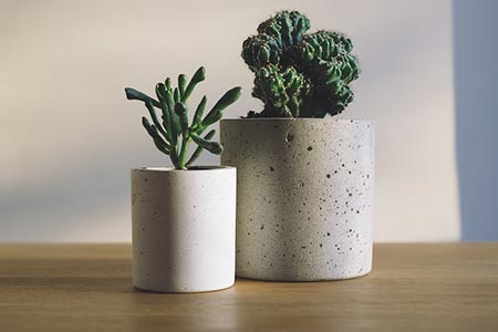 Décorer avec un cactus
