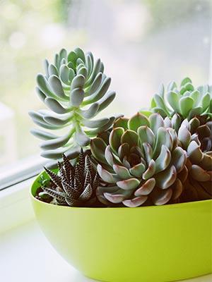 decoration-interieure-avec-des-plantes-succulentes