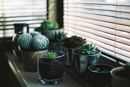 decorer-votre-interieur-avec-des-plantes-succulentes