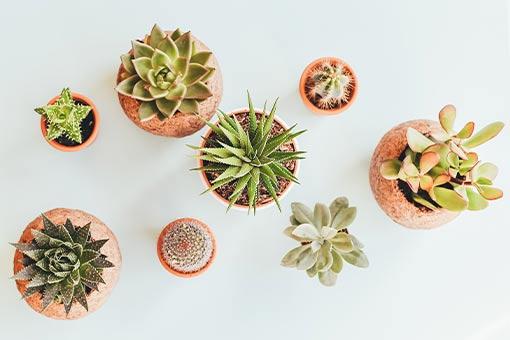 la-tendance-vegetal-des-succulents