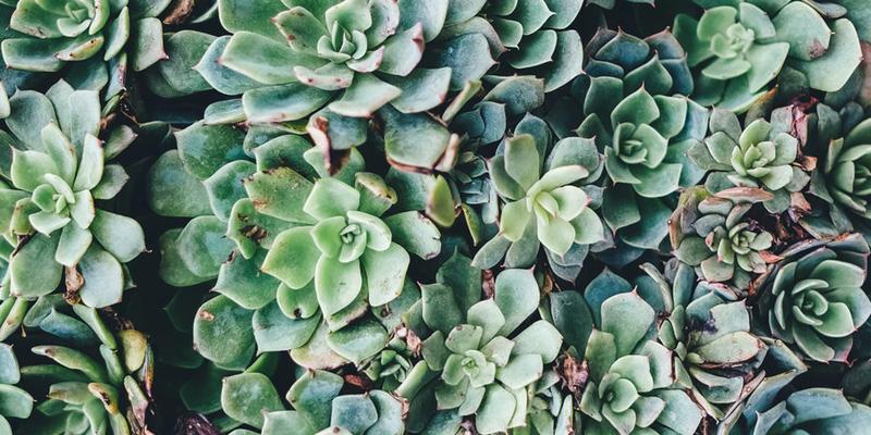les plantes succulentes idéales si vous n'avez pas la main verte