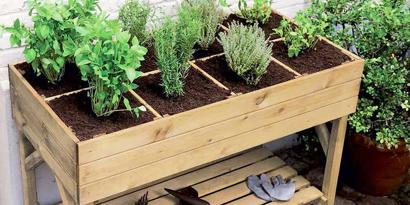 Herbes aromatiques dans une jardinière surélevée