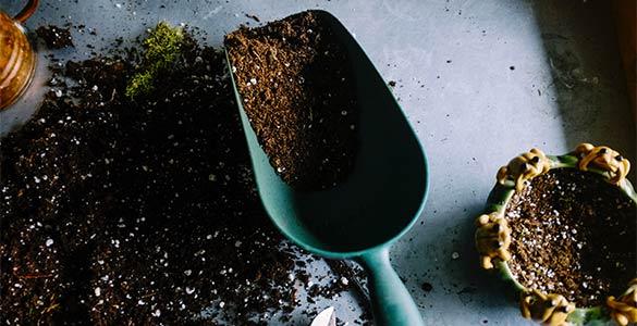 Pourquoi rempoter les plantes ?