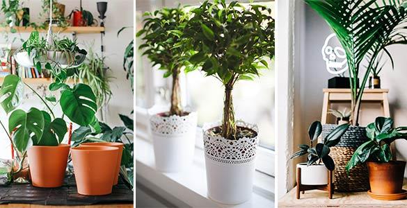 Différents styles de pots de fleurs