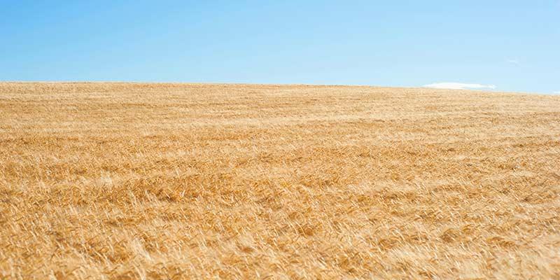 Canicule et sécheresse