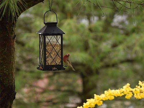 Mangeoire suspendue oiseaux