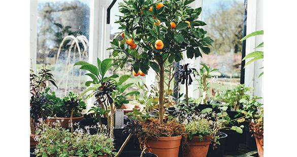 oranger-by-Annie-Spratt