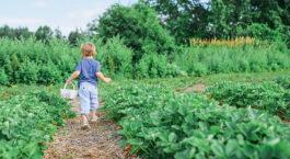 Préparer le sol du potager en automne